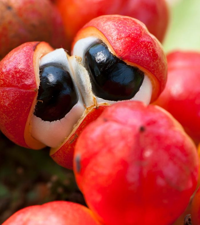 The-Goodness-Of-Guarana-What-Is-It-Why-Should-You-Try-It